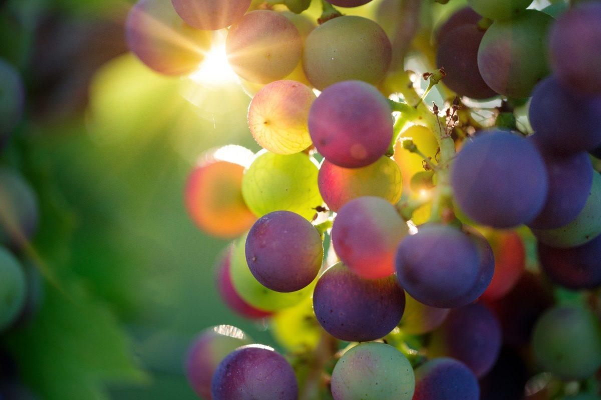 grapes-3550733-1920-3